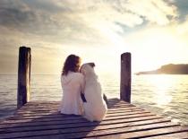 Information till hundägare i Spanien